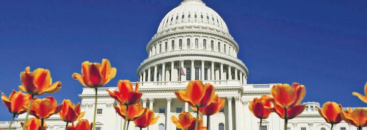 US Capitol Washington D.C.