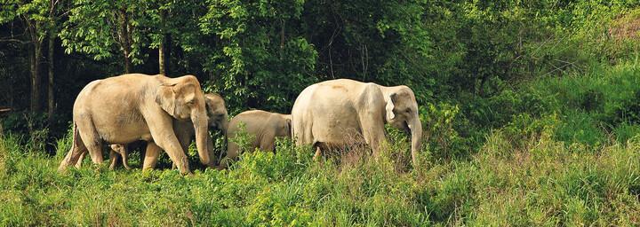 Elefanten im Kui-Buri NP