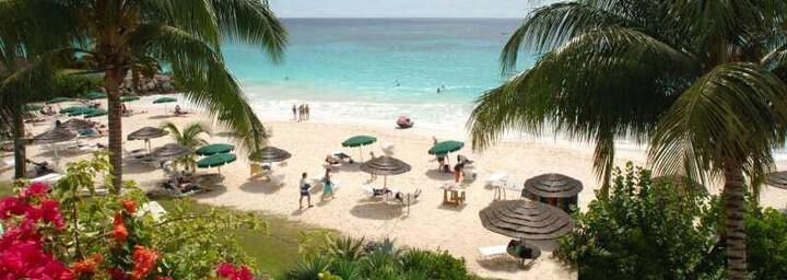 Bougainvillea Barbados Strand