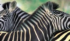 Safari im Aquila Naturreservat