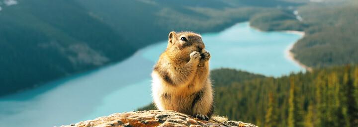 Banff Nationalpark / © Stevin Tuchiwsky