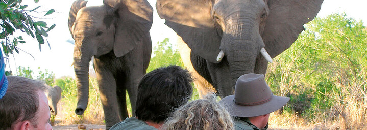 Wandersafari im Greater Krüger Nationalpark Südafrika