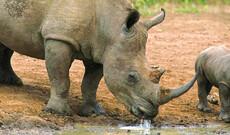 Dinokeng Big 5 Safari