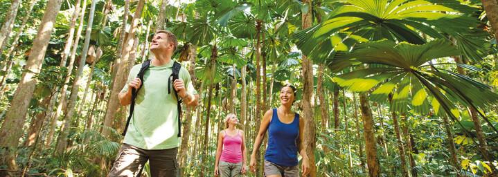 Tour durch den Regenwald im Gebiet des Daintree Nationalparks