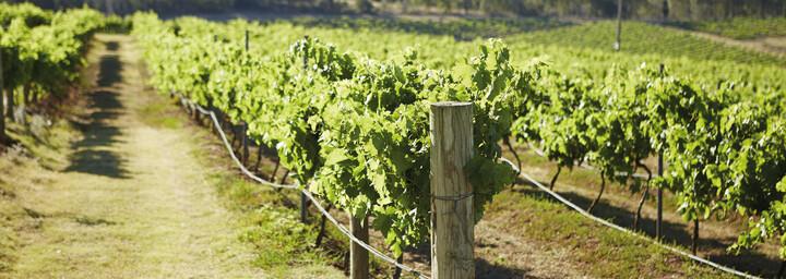 Weinregion Hunter Valley