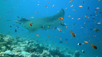 Reiseberichte Malediven: Prächtige Unterwasserwelt der Malediven