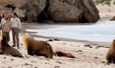 Wildlife auf Kangaroo Island
