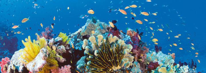 Unterwasserwelt des Great Barrier Reefs