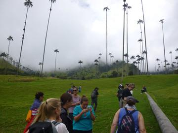 Wanderung durch das Cocora Valley in Kolumbien