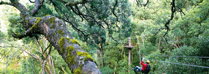 Canopy-Tour Tsitsikamma Nationalpark