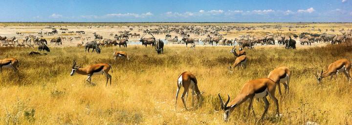Tiere am Wasserloch im Etosha Nationalpark