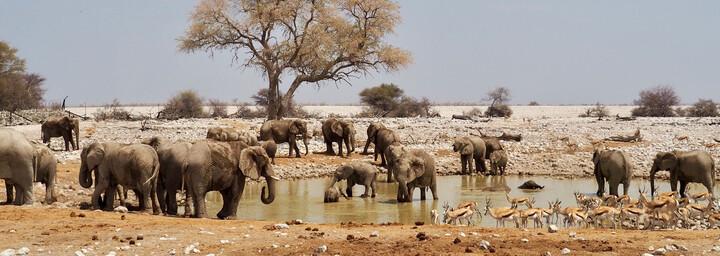 Wasserloch Etosha Nationalpark