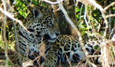Pantanal - Caiman Lodge