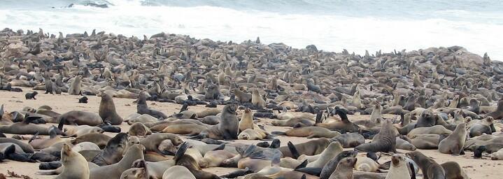 Namibia - Robben an der Skelettküste