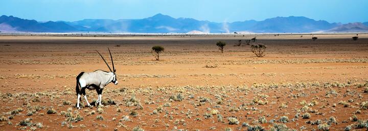 Oryx in der Namib Wüste