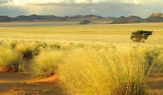 Zauberhafte Gartenroute & Karoo