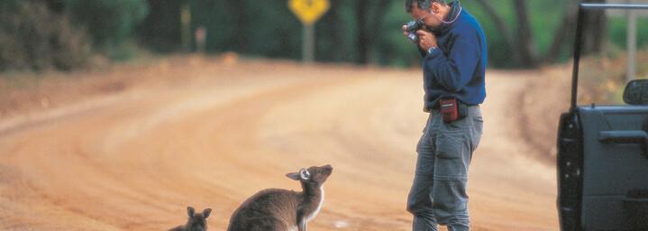 Kangaroo Island - Flinders Chase National Park - Kangaroos