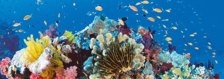 Unterwasserwelt Great Barrier Reef