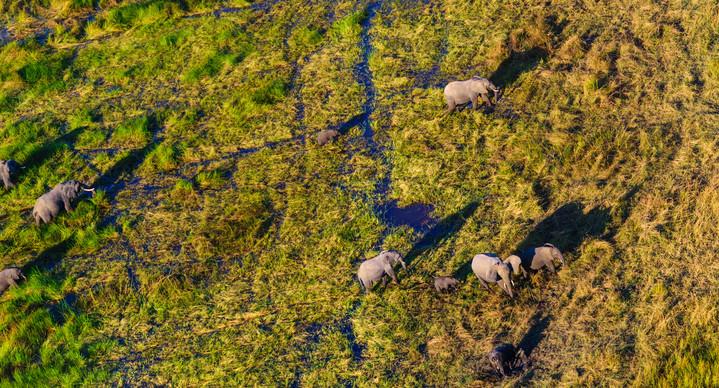 Okavango Delta Safari - Aus der Luft betrachtet: Elefanten im Okavango Delta