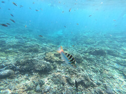 Reisebericht Bali Nusa Lembongan Unterwasserwelt