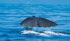 Walbeobachtung mit dem Katamaran