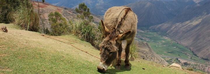 Urubamba Tal bei Cusco