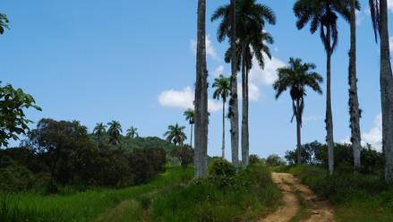 Jamaika Reisebericht  - das Inselinnere