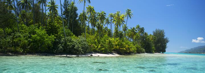 Tahiti - Blick auf Insel mit Palmen