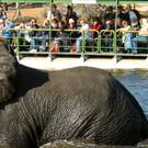 Viktoriafälle, Chobe NP & Okavango Delta Fly-In tour