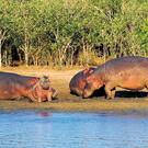 Facettenreiches KwaZulu-Natal