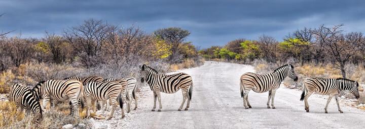 Zebras im Etosha Nationalpark Namibia