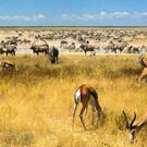 Namibias unentdeckter Norden