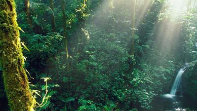 Panama Reisebericht: Monteverde Nebelwald in Costa Rica