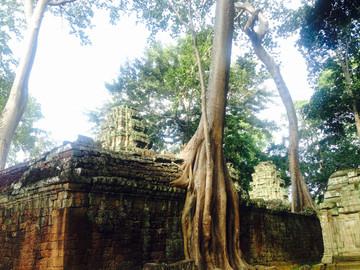 Reisebericht Kambodscha: Tempel Ta Prohm