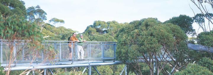 Touristen auf Brücke im Valley of the Giants