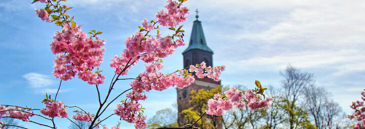 Kathedrrale in Turku