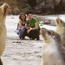 Kangaroo Island Tagestour