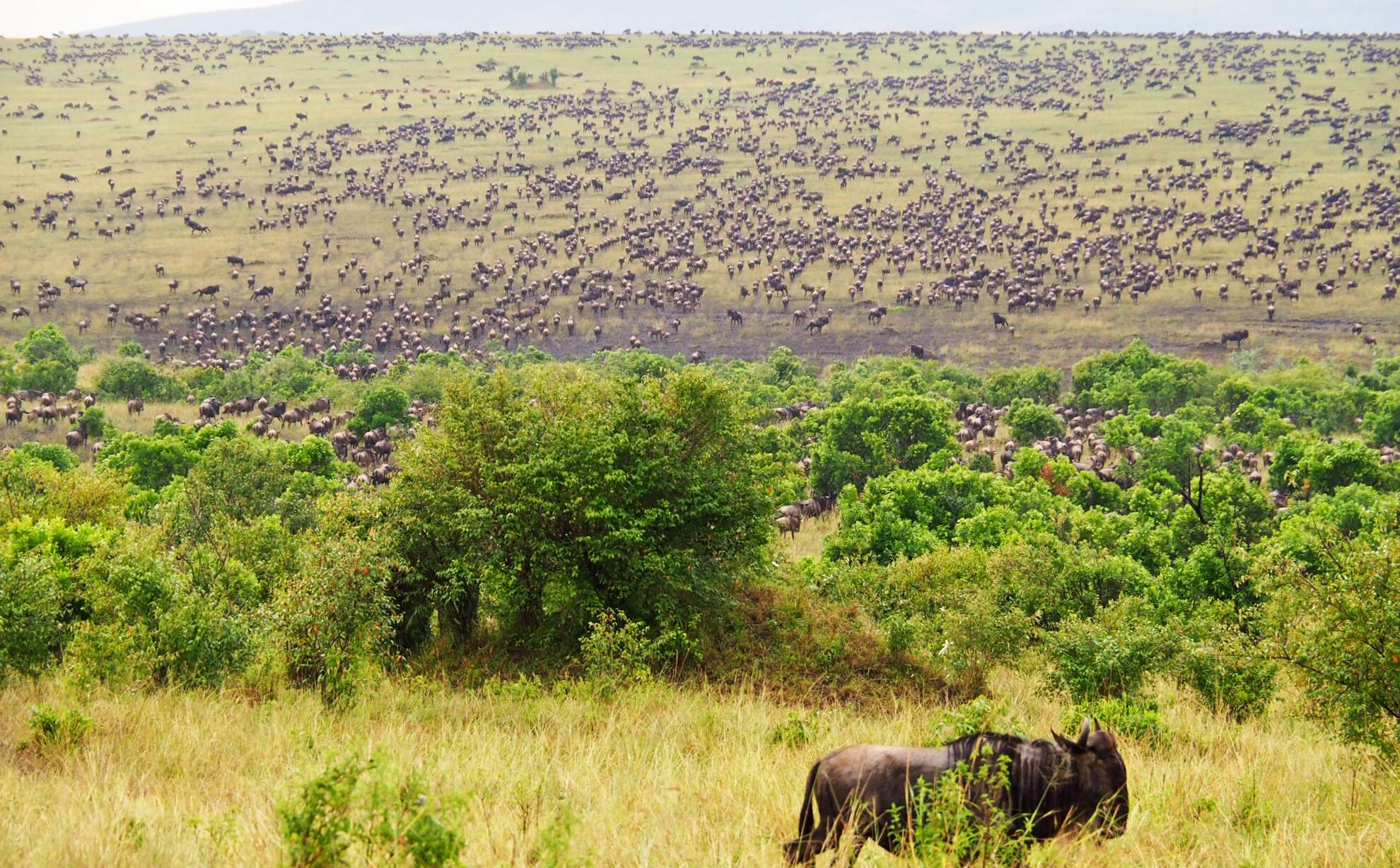 Reisebericht Kenia - Sonnenuntergang im Masai Mara Reservat