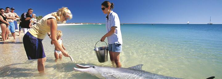 Monkey Mia Delfinfütterung Western Australia