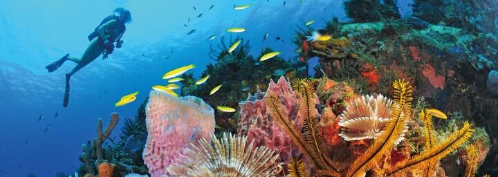 Korallen im Meer von Martinique
