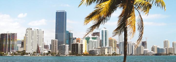 Miami Skyline und Palme