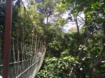 Reisebericht Malaysia - Taman Negara Nationalpark