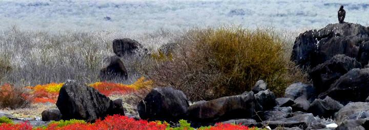 Ecuador und Galápagos Reisebericht - Landschaft