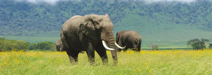 Elefant auf einer Blumenwiese