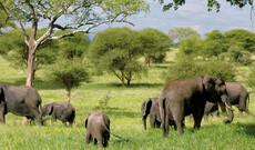 Unter den Sternen Tansanias