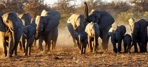 Namibias Höhepunkte inkl. Flug