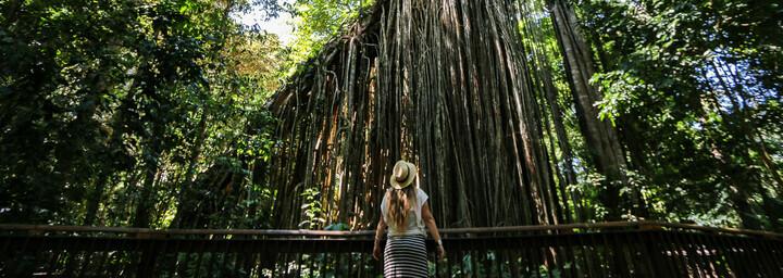 Rainforest Walk Queensland