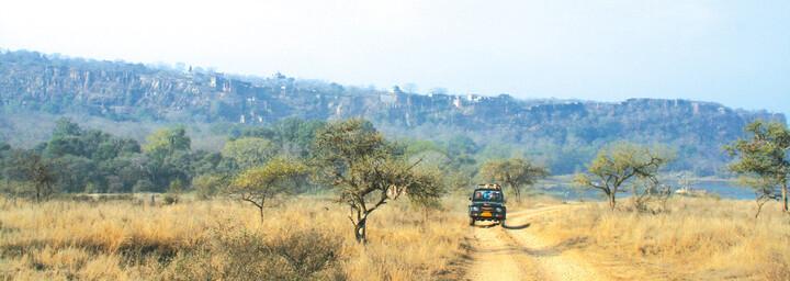Safari im Ranthambore Nationalpark