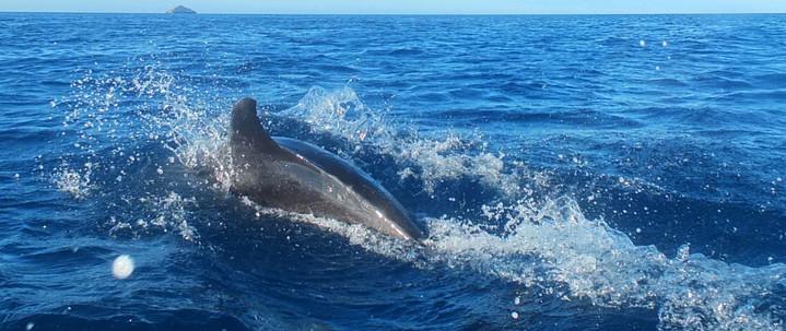 Galápagos Reisebericht - Deflin vor der Insel Bartolomé