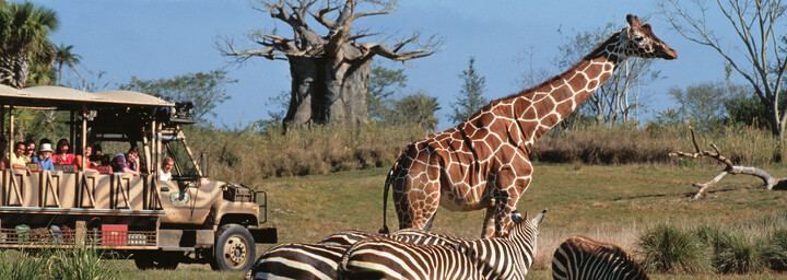 Animal Kingdom Theme Park Disney World Orlando